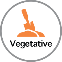 Vegetative icon