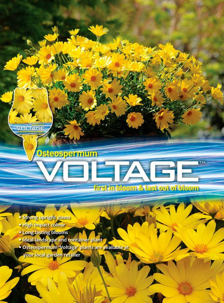 Osteo Voltage Yellow Advert