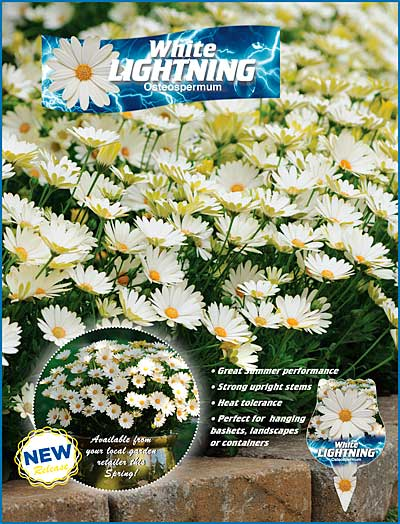 Osteo White Lightning Advert